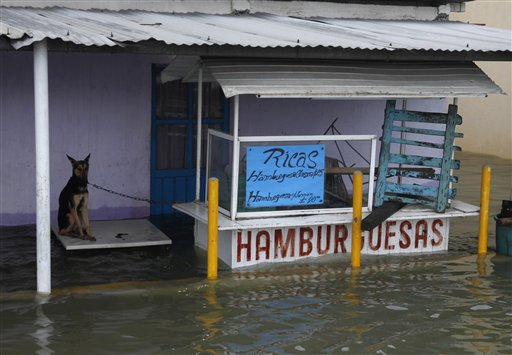 A dog chained to a hamburger stand sits on a table in a flooded street in Villahermosa in the state of Tabasco, Mexico, Wednesday Sept. 29, 2010. The area has been battered by the remnants of a hurricane and a tropical storm that followed. (AP Photo/America Rocio)
