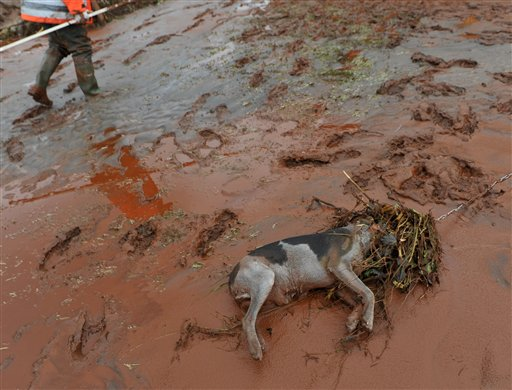 A villager passes by a dead dog killed in a flood of toxic mud in Kolontar, Hungary, Wednesday, Oct. 6, 2010. Emergency workers and construction crews on Wednesday swept through the Hungarian towns hardest hit by a flood of toxic sludge, trying to clear roads and homes of acres (hectares) of deep red mud and caustic water. Hundreds of people were evacuated after the disaster Monday, when a gigantic sludge reservoir burst its banks at metals plant in Ajka, a town 100 miles (160 kilometers) southwest of Budapest, the capital. The torrent inundated homes, swept cars off roads and damaged bridges, disgorging an estimated 1 million cubic meters (35.3 million cubic feet) of toxic waste onto several nearby towns. (AP Photo/Bela Szandelszky)