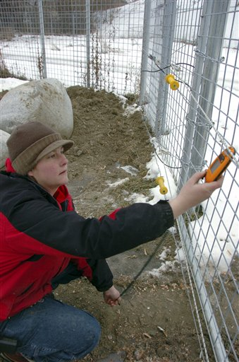 Krystal Whetham, senior zoo keeper at ZooMontana in Billings, Mont,, checks the electric fence around the bear enclosure on Friday Dec. 17, 2010, before releasing three young grizzly bears given to the zoo after their mother led the animals on a summer rampage through a Montana campground that killed a man and injured two people. (AP Photo/Matthew Brown)