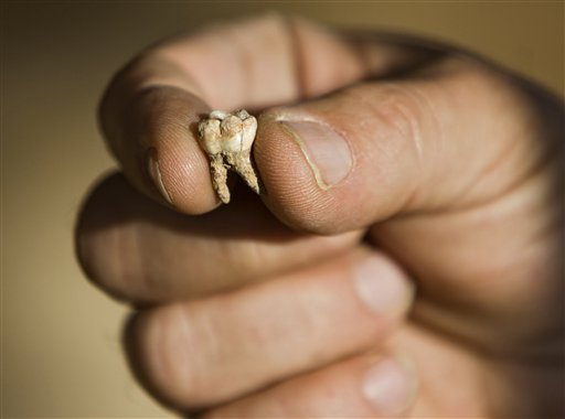 Professor Avi Gopher from the Institute of Archeology of Tel Aviv University holds an ancient tooth that was found at an archeological site near Rosh Haain, central Israel, Monday, Dec. 27, 2010. Israeli archaeologists say they may have found the earliest evidence yet for the existence of modern man. A Tel Aviv University team excavating a cave in central Israel said Monday they found teeth about 400,000 years old. The earliest Homo sapiens remains found until now are half as old. Archaeologist Avi Gopher says further research is needed to solidify the claim. If it does, he says, 'this changes the whole picture of evolution.'(AP Photo/Oded Balilty)