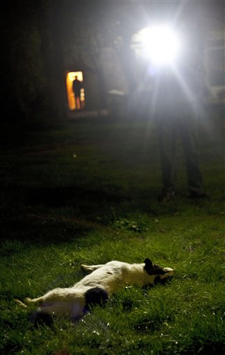 A hunter points a torch light at a dead street dog after he shot it in Kosovo's capital Pristina, in this photo taken on April, 18, 2011. Some dogs are captured and others are not so lucky, which have become the target of a campaign to cull street dogs in Kosovo. Authorities in Kosovo's capital of Pristina say 190 street dogs have been shot and killed in the first three weeks of a culling campaign that has been harshly criticized by animal lovers, but officials justify the campaign, claiming the city is plagued by packs of dogs that often attack people. (AP Photo / Jetmir Idrizi)