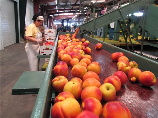 In this Friday, July 29, 2011, photo, a worker packs ripe peaches into boxes at the Titan Farms packing plant in Ridge Spring, S.C. The farm is benefiting from an agreement allowing U.S. farmers to sell peaches in Mexican grocery stores for the first time since 1994. (AP Photo/Jeffrey Collins)