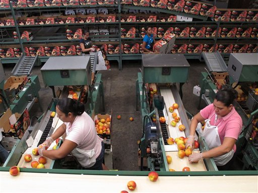 In this Friday, July 29, 2011, photo, workers prepare peaches to be put in boxes at the Titan Farms packing plant, in Ridge Spring, S.C. The farm is benefiting from an agreement allowing U.S. farmers to sell peaches in Mexican grocery stores for the first time since 1994. (AP Photo/Jeffrey Collins)