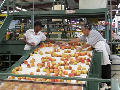 In this Friday, July 29, 2011, photo, workers inspect peaches at the Titan Farms packing plant, in Ridge Spring, S.C. The farm is benefiting from an agreement allowing U.S. farmers to sell peaches in Mexican grocery stores for the first time since 1994. (AP Photo/Jeffrey Collins)